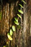 叶子植物 免版税库存图片