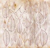 叶子概述在葡萄酒老纸背景的集合 库存图片
