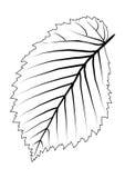 叶子概述结构树 图库摄影
