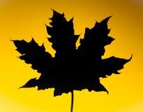 叶子槭树剪影 免版税库存图片