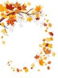 叶子槭树漩涡 向量例证