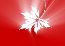 叶子槭树红色 皇族释放例证