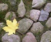 叶子槭树 图库摄影