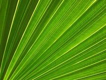 叶子模式表面静脉 免版税库存照片