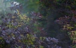 叶子浇灌 免版税图库摄影