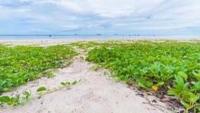 叶子海滩 库存图片