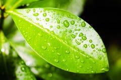 叶子湿表面  图库摄影