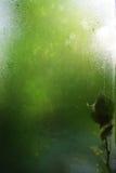 叶子湿视窗 免版税库存照片