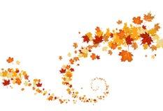 叶子漩涡 库存照片