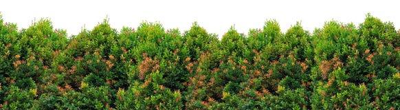 叶子灌木 免版税图库摄影