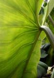 叶子热带下面 免版税图库摄影