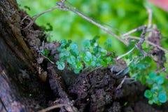 叶子特写镜头在模糊的叶子背景中 图库摄影