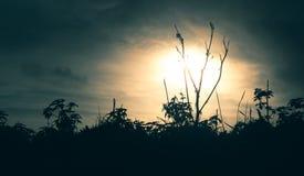 叶子现出轮廓反对日落 库存照片