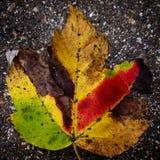 叶子甜点 库存图片