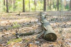 叶子用下落的日志盖了道路在森林里 一棵下落的树在森林 库存图片