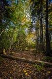 叶子用下落的日志盖了道路在森林里 库存照片