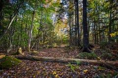 叶子用下落的日志盖了道路在森林里 图库摄影
