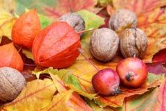 叶子用核桃和小的苹果 免版税库存照片