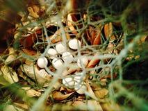 叶子用鸡蛋 免版税库存照片