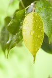 叶子用水下降宏指令 库存图片