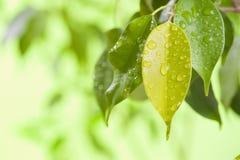 叶子用水下降宏指令 库存照片