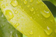 叶子用水下降宏指令 免版税库存图片