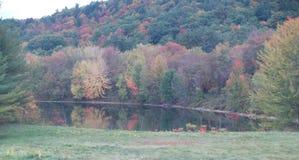 叶子用水 库存照片