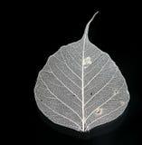 叶子白色 库存照片