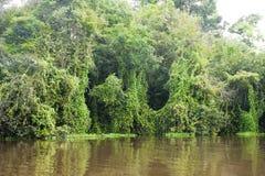 从叶子的帷幕在亚马逊 免版税库存照片
