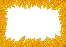 叶子的无缝的边界样式 免版税图库摄影