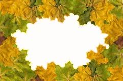 从叶子的框架 免版税库存图片