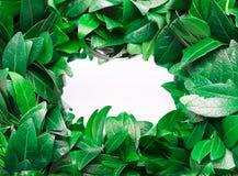 从叶子的框架 免版税图库摄影