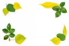 从叶子的框架 图库摄影