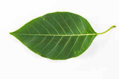 叶子的模式 图库摄影