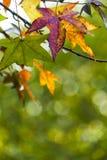 叶子的秋天 免版税库存图片