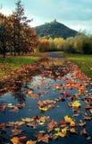 叶子的道路 库存图片