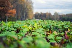 叶子的领域在秋天背景的 免版税库存照片
