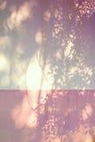 叶子的阴影在墙壁上的 免版税图库摄影