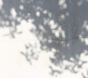 叶子的阴影在墙壁上的 免版税库存图片