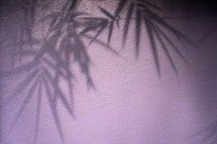 叶子的阴影在墙壁上的 库存图片