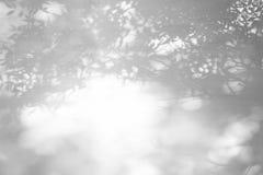 从叶子的阴影在涂灰泥的墙壁上 库存图片