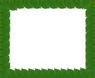 从叶子的绿色方形的框架 免版税库存图片