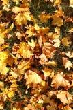 叶子盖子在秋天公园 免版税库存图片