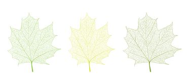 叶子盖子模板 库存例证