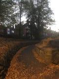 叶子盖的道路,在秋天 库存照片