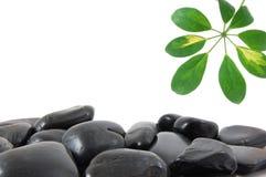 叶子石头 免版税库存照片