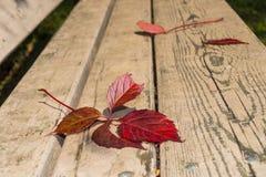 叶子秋天在公园 免版税图库摄影