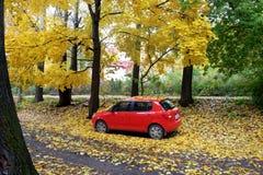 叶子秋天在城市 免版税库存照片