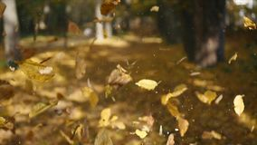 叶子秋天在秋天城市公园 美好的背景 库存照片