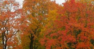 叶子秋天在秋天城市公园 股票视频
